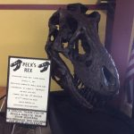 image of Doug True's T-Rex Skull model
